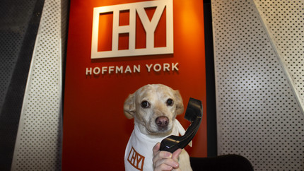 Dog answers phones at Hoffman York for Take Your Dog to Work Day
