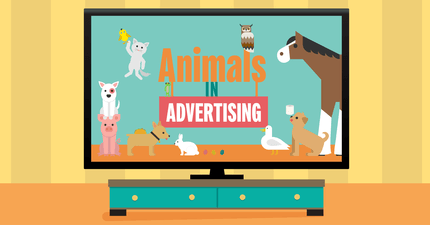 A group of iconic animals in advertising within a TV